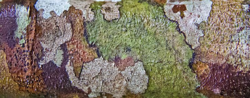 camuflagem-tronco