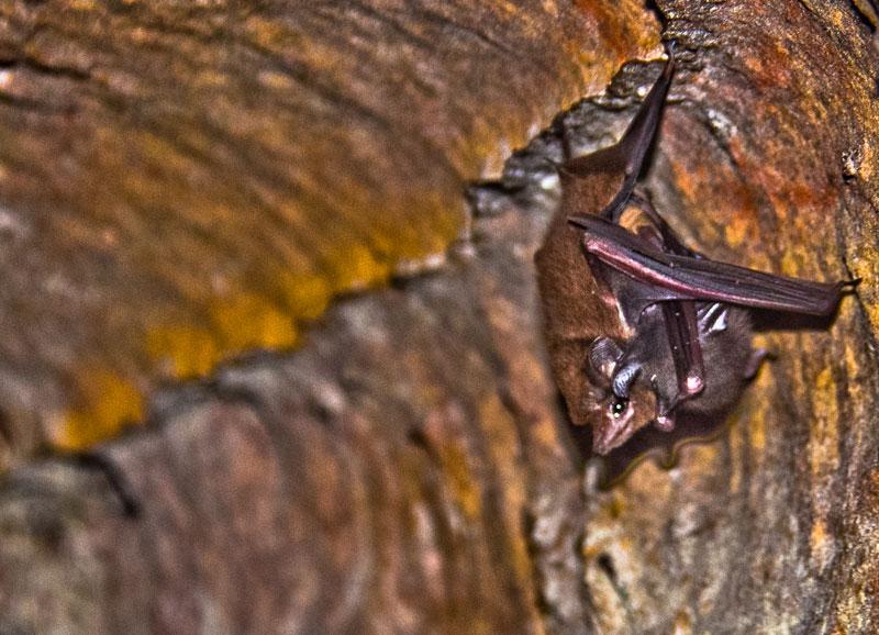 grutas-do-madada-morcegos
