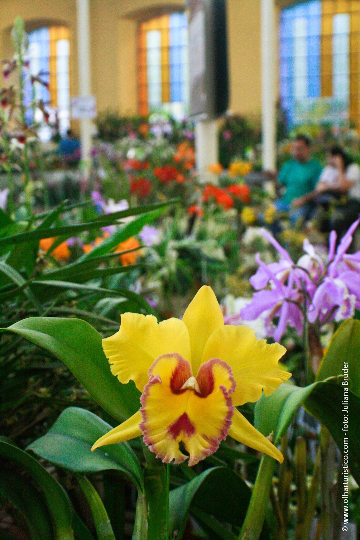 A cidade de São Roque realiza anualmente grande exposição de orquídeas.