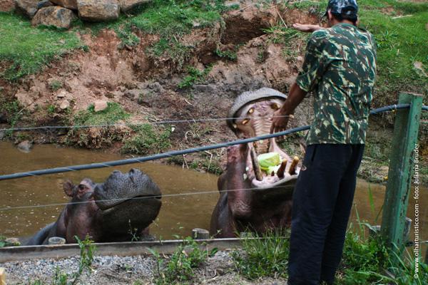 hora-do-lanche-dos-hipopotamos
