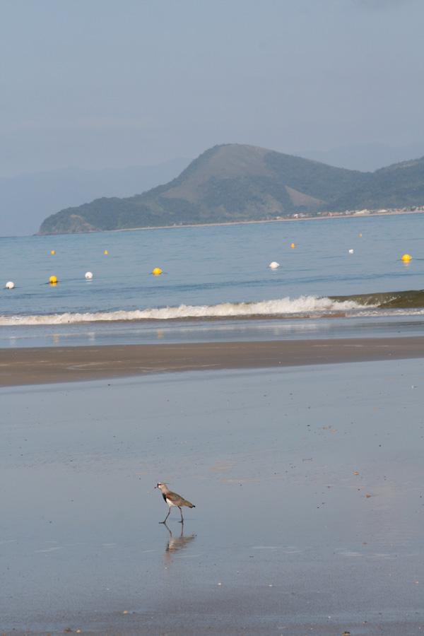 muito-avistados-no-litoral