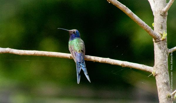 varias-especies-de-beija-flor-ppodem-ser-vistos